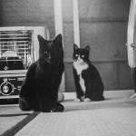 ストーブの温度を上げろと目で訴える10匹の猫さん😆