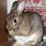 もう、ウサギが馴染みすぎて猫に思えないwwwww