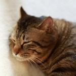 癒やされないワケがない。相変わらず完成度の高い猫の寝顔😸