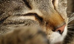 猫の枕にこれ以上最適な野菜があるだろうか😴