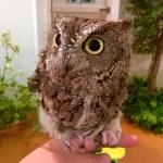 それにしてもこのフクロウ、お風呂でノリノリである