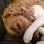 とにかく、犬と猫の境目がわかりにくいwwwwww