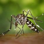 蚊は最後まで血を吸わせたら痒くならない!?→試してみた結果www