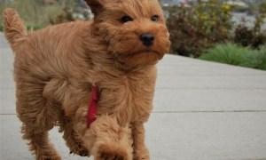 山の上で強風に耐える犬の表情がクッソじわるwwwww