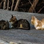 田代島での猫行列〜!