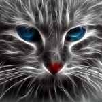 この猫、あまりに前衛的なポージングである😼