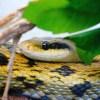 ラジコンヘリならぬ「ラジコンヘビ」の動きが妙にリアルw