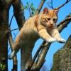 ちょっとした工夫で「猫が絵から飛び出してくる」感じが楽しめるDIYが話題にw