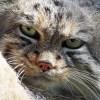 まるで日大の会見を見ているかのような表情の猫😾