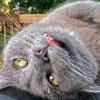 第二の人格に体を乗っ取られかけた猫、ギリギリのところで正気を取り戻すwww
