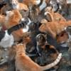 パーフェクト猫団子。そう呼ぶことにした。