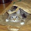 猫が紙袋にダイブを試みた結果…正直そうなるような気はしていた😂