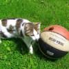 「やめてえええ!」 サッカー中継に夢中の猫、やらかすwww