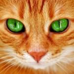 """「夢に出るわ!」…道端に設置された""""猫よけ看板""""が怖すぎる👁👁"""