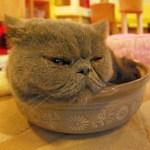 アルミ製の「ひんやり猫鍋」から動こうとしない猫さんたち…それ逆に暑くないかい😅