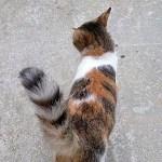 生まれて初めて自分の尻尾の存在に気がついた子猫🙀