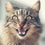 「ジム終わりかな?」あまりにパーフェクトボディな猫が目撃されるwww