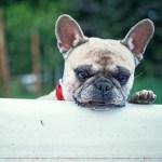 「よきかな…」犬専用の露天風呂に入った老犬の表情がたまらない😍