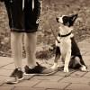 """知ってた? 犬の散歩における""""黄色いリボン""""は「そっとしといて!」という意味らしい"""