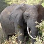 天王寺動物園が「ゾウの檻の中」を見学できるレアなイベントを開催。飼育員のコメントも面白いと評判に