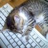 """「あるあるw」憧れだった""""猫がいる職場""""を実現してみた結果www"""