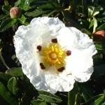 """ゴジアオイという花が子孫繁栄の為にする""""行動""""がヤバすぎる! まさに「植物界のサイコパス」だと話題に"""
