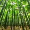 さすが代官山…生えてる竹でさえハイブランドwww