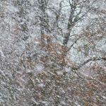 地元民「これが冬の日常」…日本最北端・宗谷岬のあまりにも過酷な映像が話題に