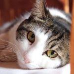 「カワイイけど困る…」ヒーターの暖かさを覚えてしまった猫が驚きの行動に出るw