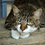 「なんと安らかな…」 爪切りされることを覚悟した猫さんの顔www