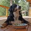 「もうやめたりーな」…犬に意地悪する飼い主を見ていた別の犬による紳士的行動が微笑ましいw