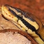 """生きた蛇を使った""""回転ディスプレイ""""が実にシュールw「このまま展示できそう」"""
