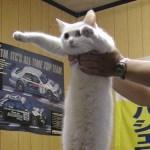 15年ほど前に世界的ネットミームとなった「胴長ネコ」は今も健在!その姿がこちら