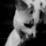 猫と遊ぶ様子を撮影したら…ヤバすぎるものが映り込んでいた🙀