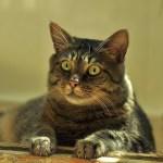 いつもより高級なキャットフードを口にした猫のリアクションwww