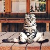 【動画】「これは誘ってるわ…」とんでもない格好でくつろぐ猫さんが発見されるwww