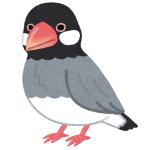 なんというフィット感…「つけまつげ」で遊んでいた文鳥にミラクルが起きたwww