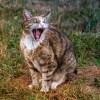 【動画】遅くまで仕事してたら猫がこうなった…😹