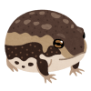 【ど根性】飼っているカエルに『雪見だいふく』の容器でお風呂を作ってあげた結果…www