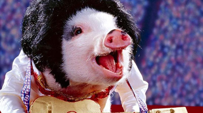 Ketika Babi Berpikir