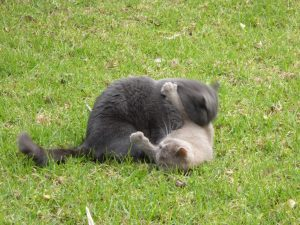 Frank and Jelly rumbling on the grass