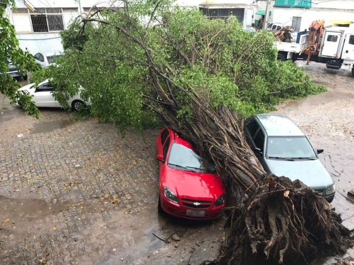 Choveu 75 mm em 12 horas, em João Pessoa; causando a queda de pelo menos duas árvores sobre carros (Foto: Walter Paparazzo/G1)