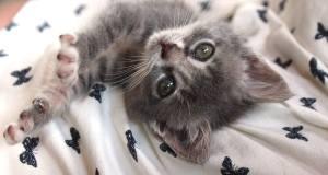 tırnaklarını gösteren yavru kedi