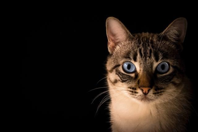 kedi siyah arkaplan