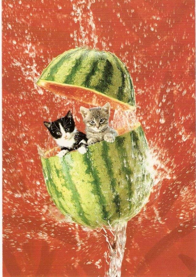 karpuz içinde kediler