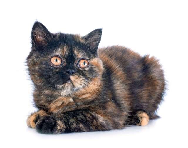 ürkek bakışlı yavru kedi