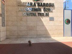 Rinti Ankara Barosunda iş başı yaptı