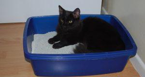 siyah kedi kedi kumunda uzanıyor.