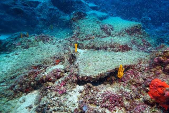 Denizlerimize binlerce yeni tür girdi ve yaklaşık 450 tanesi istilacı