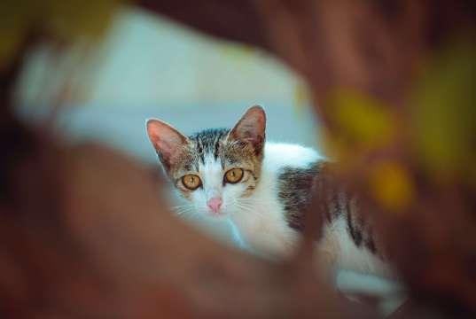 ürkek bakan kedi